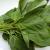 モロヘイヤの栄養・効果や効能は?食べ方や加熱調理に注意!