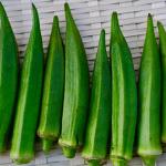 オクラの栄養や効果効能について。夏バテや美容にも良い?