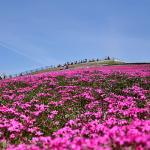 長野県で日帰り登山ができるオススメの山6選