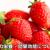 苺の栄養・効果効能について。ビタミンCや食物繊維が豊富
